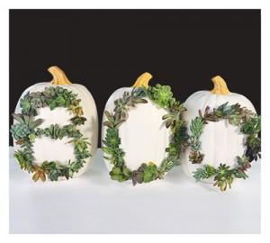 2015.10.05_Succulent-Pumpkin